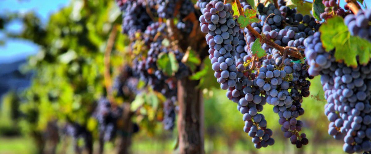 Virginia Wine Tours